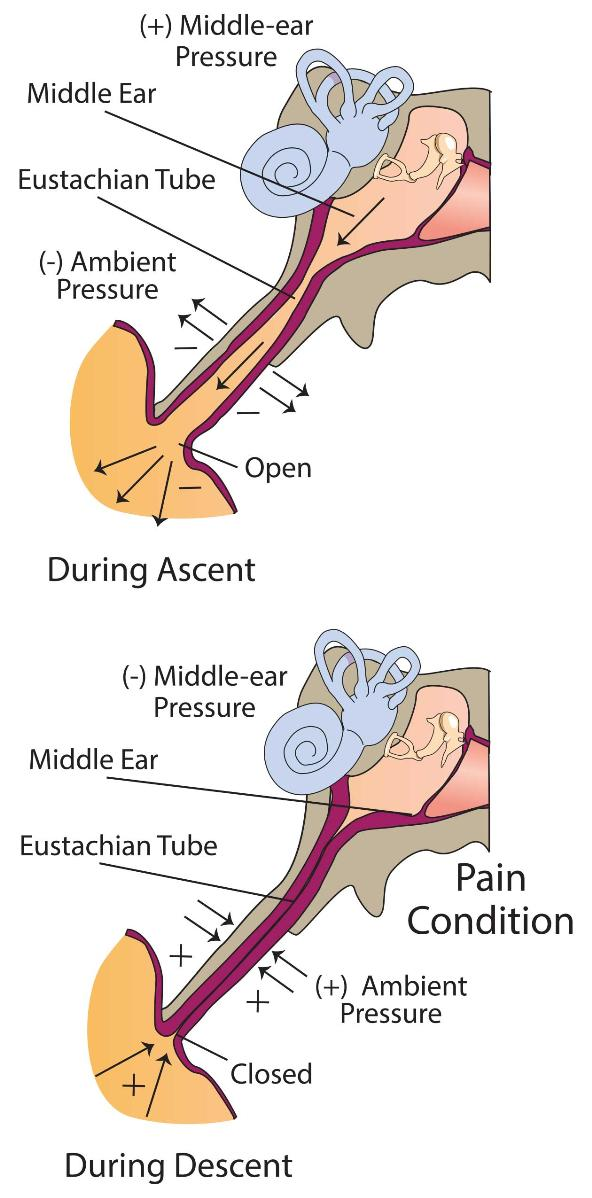 middle ear equalization ears diving dan health diving